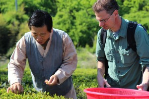 Ray picking tea with Mr. Choi of Bohyang Tea Farm in Korea